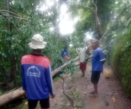 Pohon Jati Ambruk Menimpa Tiang Listrik Di Ngenep