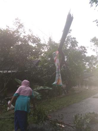 Pohon Ambruk Menimpa Jaringan Listrik
