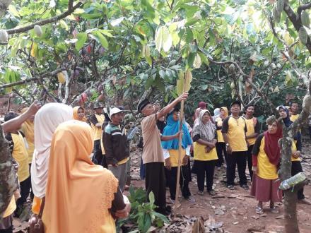 Studi Banding Petani Kakao