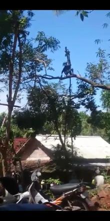 Kerjabakti Rabas Pohon Dusun Pencitrejo